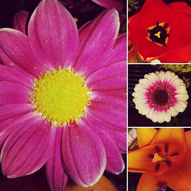 fiori fibonacci